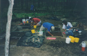 SD forest dig